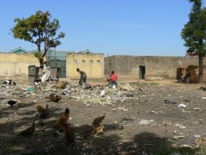 Gallos y gallinas por la calle.